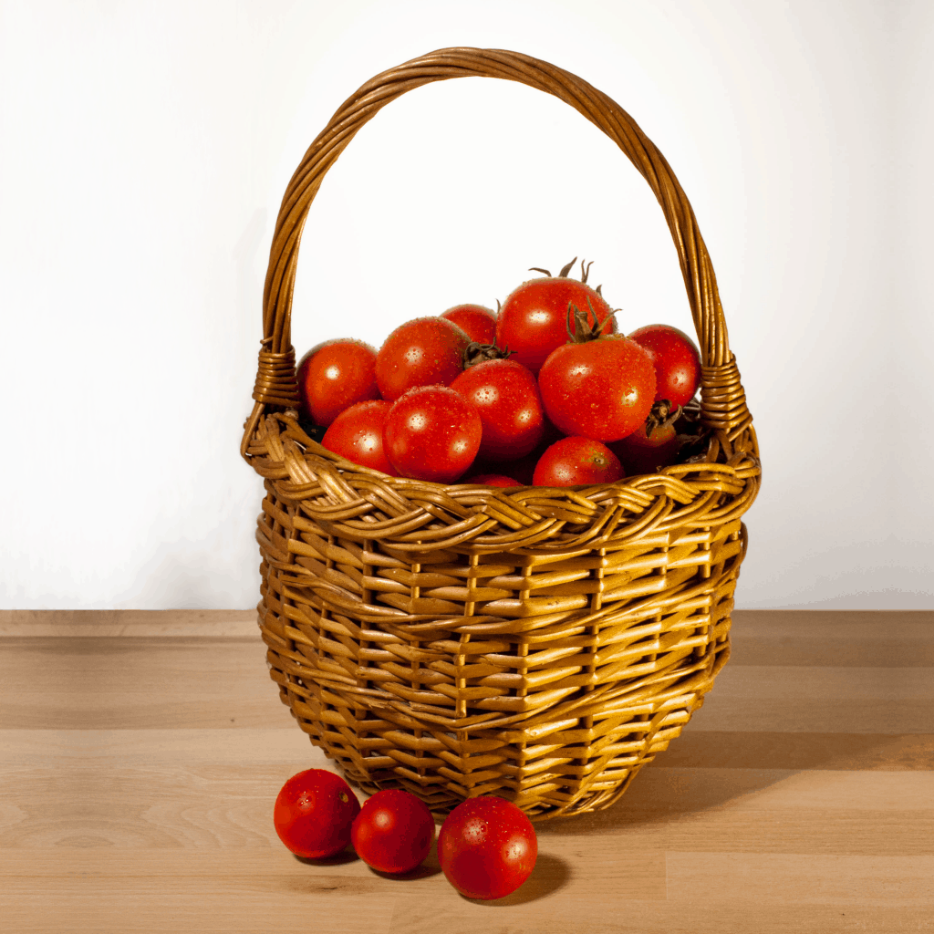 Frische geerntete Tomaten in einem Korb.